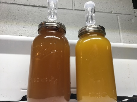 Half gallon mason jars fitted with airlocks holding sumac wine on the left and mango wine on the right